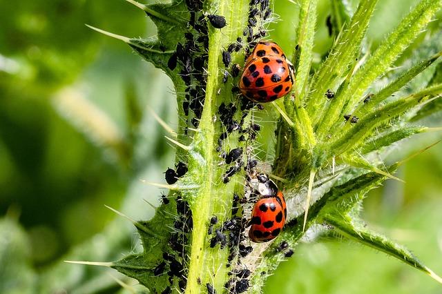 Škůdci na našich zahradách