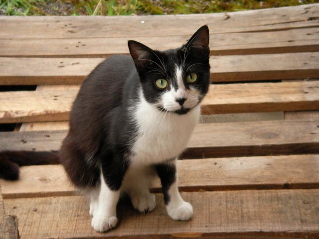 paleta s kočkou