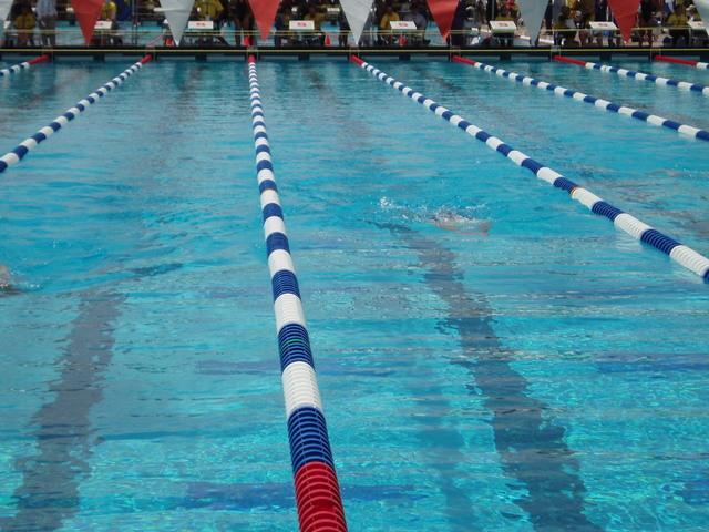 plavci v plaveckém bazénu